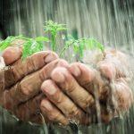 A água em todos os processos da vida